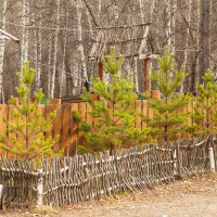 забор елки